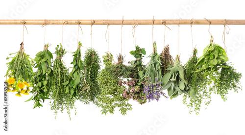 In de dag Verse groenten fresh herbs hanging isolated on white. basil, rosemary, thyme, m