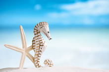 Seahorse With White Starfish On White Sand Beach, Ocean,  Sky An