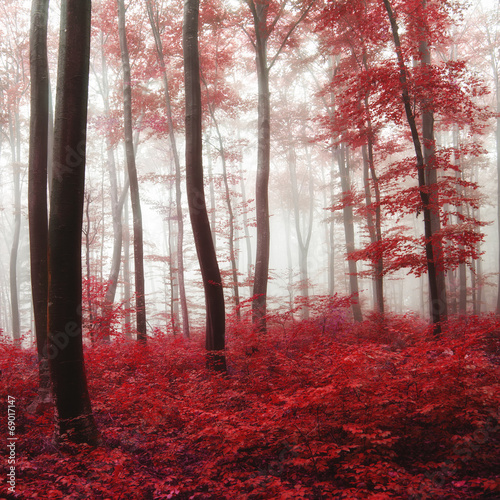glow-light-autumn-forest