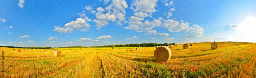 Fototapety, obrazy: Summer country