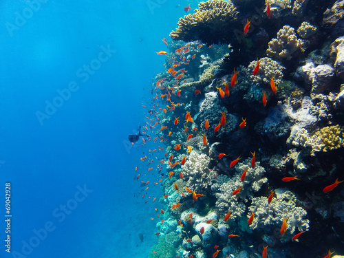 Poster Coral reefs coralreef_7