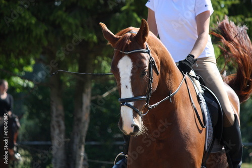 La pose en embrasure Equitation Portrait of chestnut sport horse