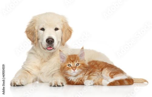 Fotografia Golden Retriever puppy and ginger kitten