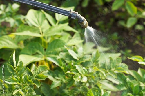 Fotografía  processing of pesticide on country garden