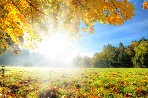 Foto op Canvas Herfst Beautiful autumn tree with fallen dry leaves