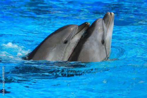 Foto op Plexiglas Dolfijnen two dolphins