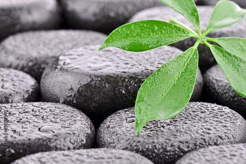 Liść z kamieniami bazaltowymi - fototapety na wymiar