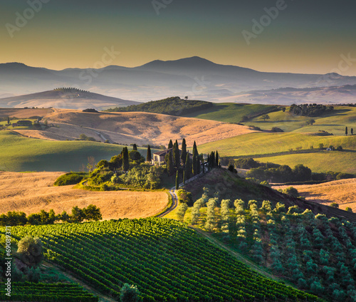 Fototapety, obrazy: Tuscany landscape in golden morning light, Val d'Orcia, Italy