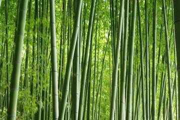 Panel Szklany Podświetlane Bambus 緑の竹林