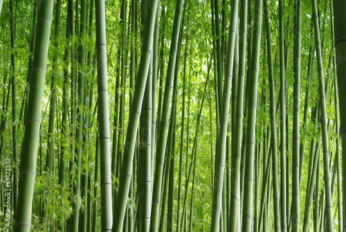 緑の竹林 - 69122332