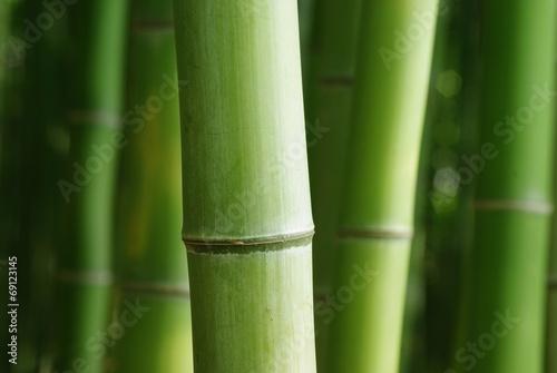 In de dag Bamboo 青竹