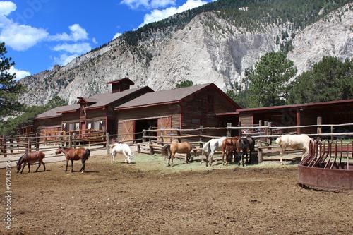 Fotografie, Obraz  USA - Ranch and coral