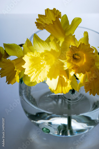 Narcissus beauty, narcissus, decoration, flower, fresh, yellow