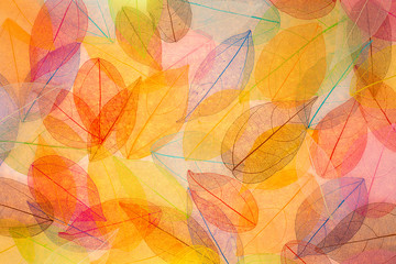 Obraz na Plexi Autumn background