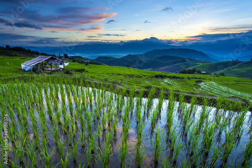 Terrace rice field over the mountain,thailand