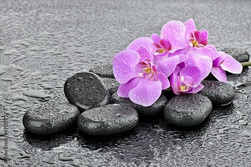 Crédence de cuisine en verre imprimé Bestsellers Storczyki na kamieniach bazaltowych