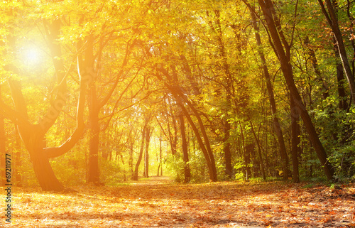 Magical autumn forest on a sunny day