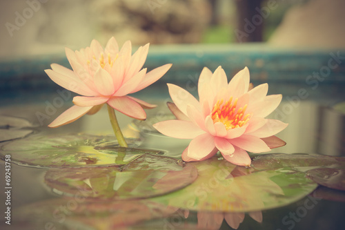 Wall Murals Water lilies A beautiful pink waterlily or lotus flower in pond vintage photo
