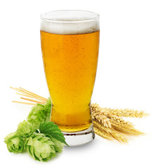 Fototapeta Glass of fresh Beer with green Hops and ears of barley isolated