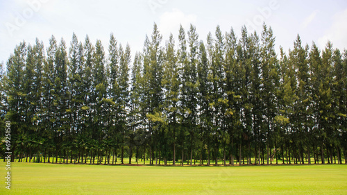 Deurstickers Wijngaard Landscape of a beautiful green golf course with sky