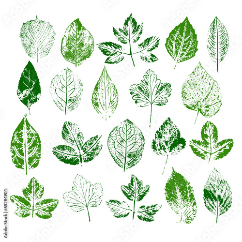Paint stamps of different leaves set #69284904