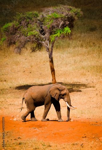 Staande foto Afrika African elephants