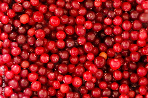 Fotografia  Cranberry Background