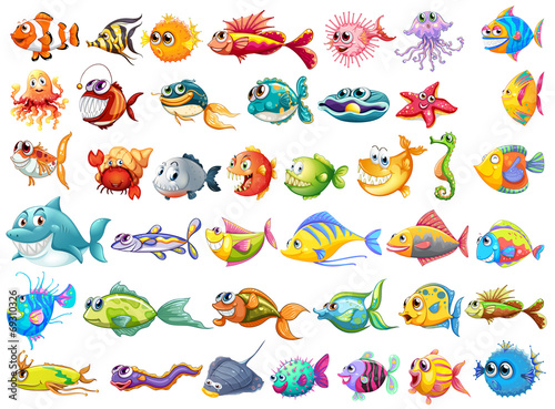Fototapeta premium Kolekcja ryb