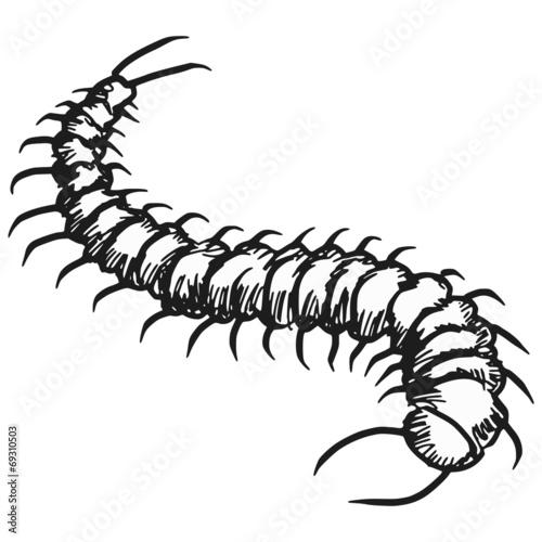 Fotomural centipede