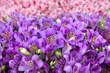Leinwandbild Motiv Bouquet of beautiful flowers.