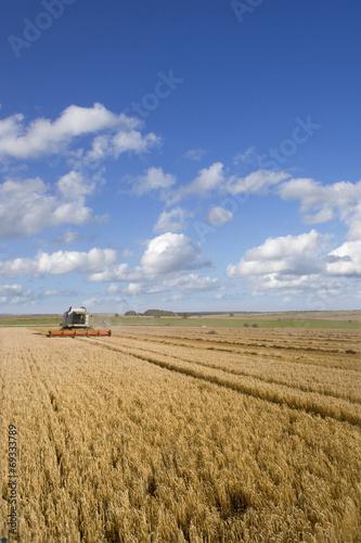 Foto auf Gartenposter Landschappen Barley field