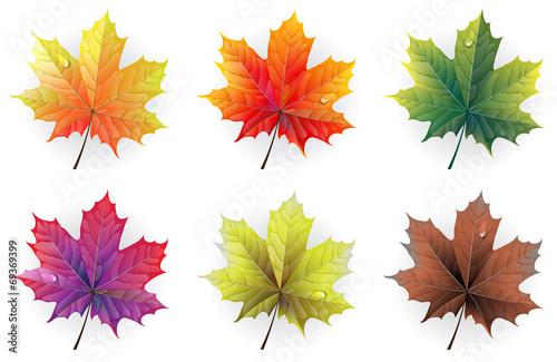 Fototapeta Autumn maple leaves