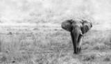 Elephant - 69396771