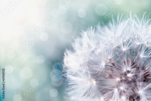 Staande foto Paardebloem dandelion