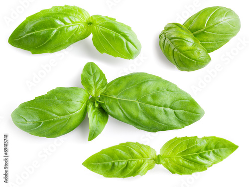 Fotografie, Obraz  Basil leaves isolated. Collection