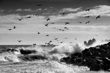 FototapetaKrajobraz morski, Mewy