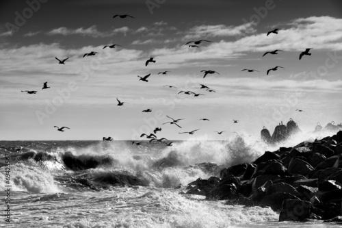 Fotobehang - Krajobraz morski, Mewy