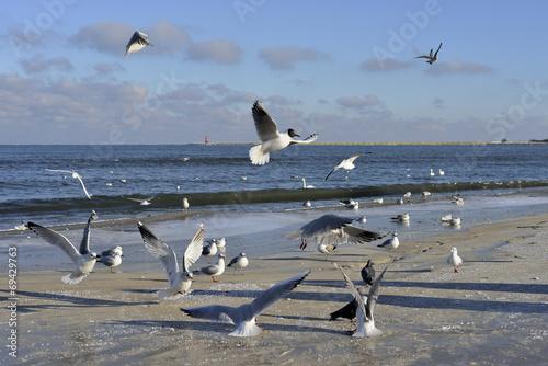 Fotobehang - Krajobraz morski z mewami, zima
