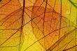leaf texture - in detail