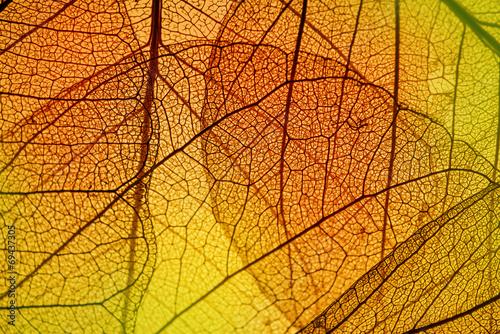 Obraz leaf texture - in detail - fototapety do salonu