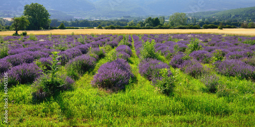 Tuinposter Lavendel Lavender field