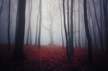 Misty Forest Landscape With Co...
