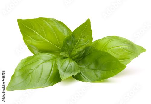 Tableau sur Toile Sweet basil leaves