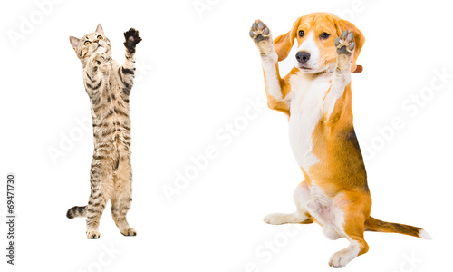 Cat and dog together standing on his hind legs Wallpaper Mural