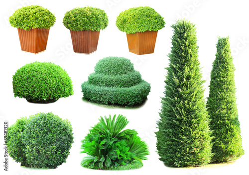 Foto Collage of green bushes isolated on white