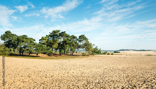 Fotografia, Obraz  Large sandy nature reserve early in the morning