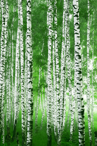 Nowoczesny obraz na płótnie Naturalny piękny las brzozowy