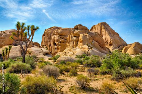 Obraz Park Narodowy Joshua Tree - fototapety do salonu