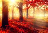 Fall scene. Beautiful autumnal park in sunlight