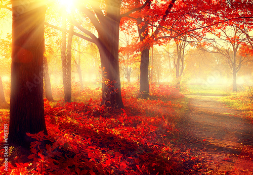 Aluminium Prints Autumn Fall scene. Beautiful autumnal park in sunlight